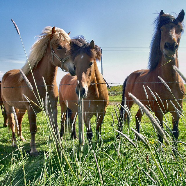 stage chevaux
