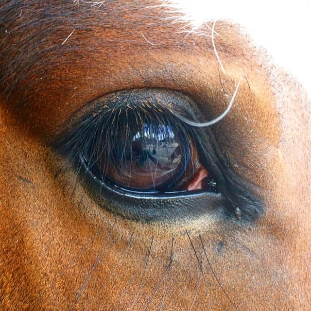 sport étude cheval